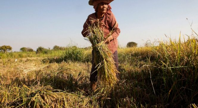 Nearly a half-billion in Asia-Pacific still going hungry: UN
