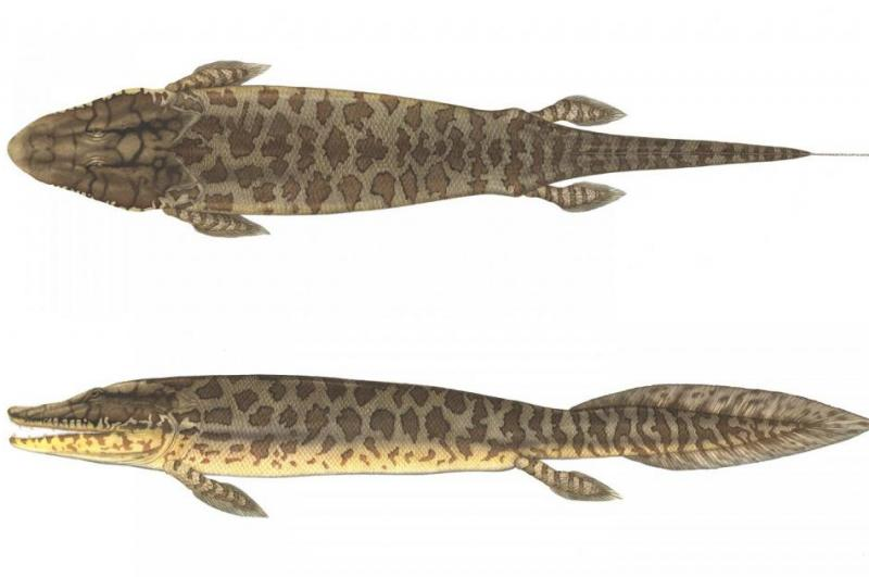 Fish fossils show how fins became limbs