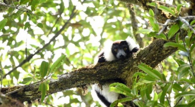 Most of Madagascar's rainforest on pace to disappear by 2070