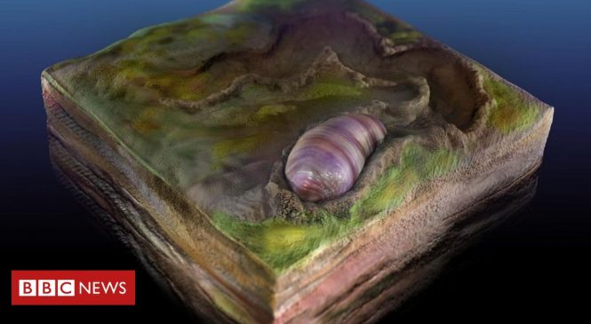 Fossil worm shows us our evolutionary beginnings