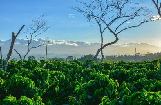 Crop diversity can help fight climate change, new study shows