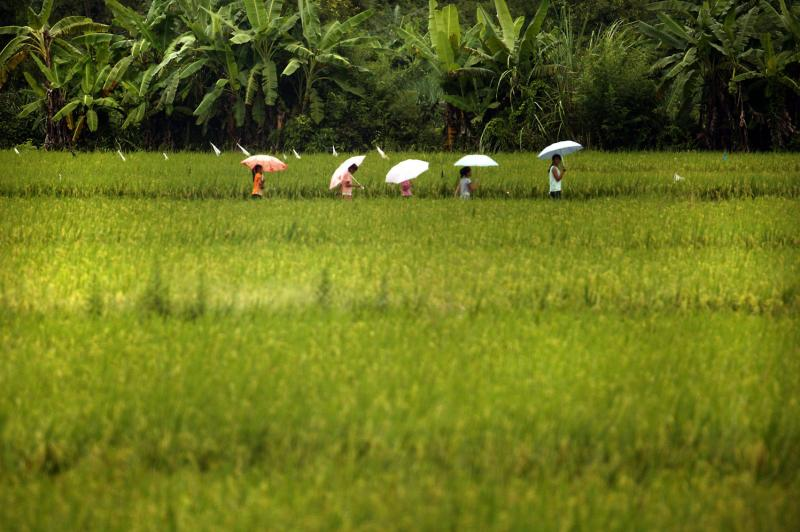 Genome editing strategy could give rice, other crops nutritional boost