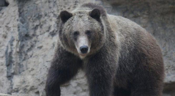 Study: Small predators get ambushed at kill sites of larger predators