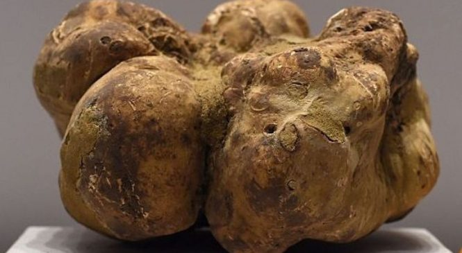 Life on Mars? Organic truffle molecules discovered on Red Planet
