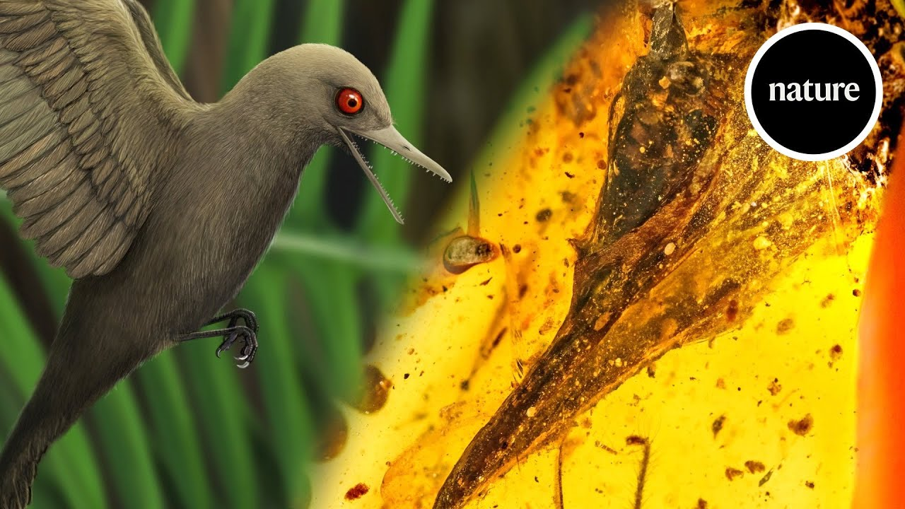 Smallest known dinosaur found trapped in 99-million-year-old amber