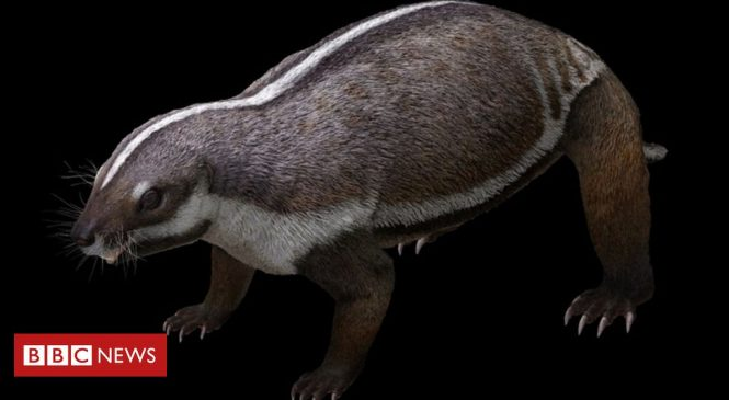 'Crazy beast' lived among last of dinosaurs