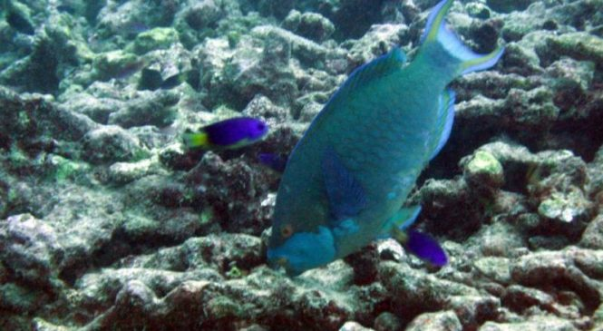 Global warming is undoing decades of progress made protecting marine reserves