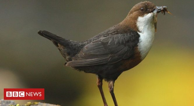 Pollution: Birds 'ingesting hundreds of bits of plastic a day'