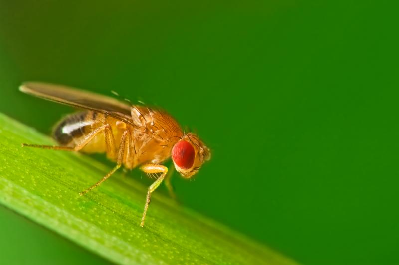 Disabled flies sleep more as they learn to adapt