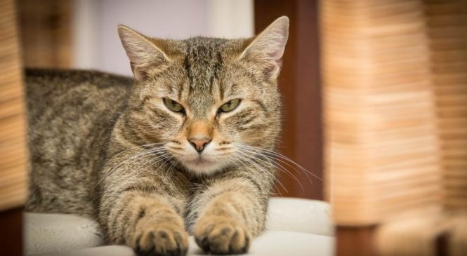 Household cats can catch COVID-19 from humans, CDC reports