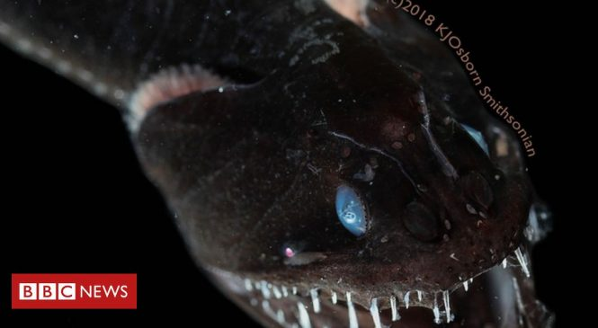 Scientists shed light on how the blackest fish in the sea 'disappear'
