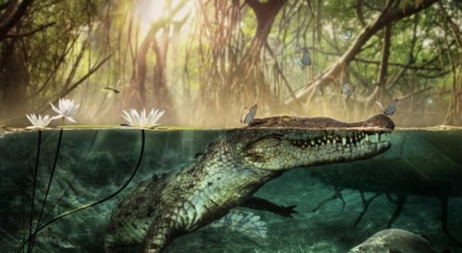 American crocodiles left Africa more than 5 million years ago, skull analysis suggests