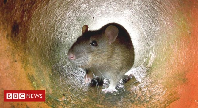 City growth favours animals 'more likely to carry disease'