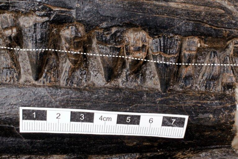 Paleontologists find giant lizard in stomach of a prehistoric marine carnivore