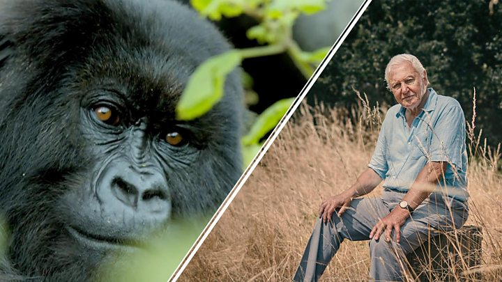 Sir David Attenborough makes stark warning about species extinction