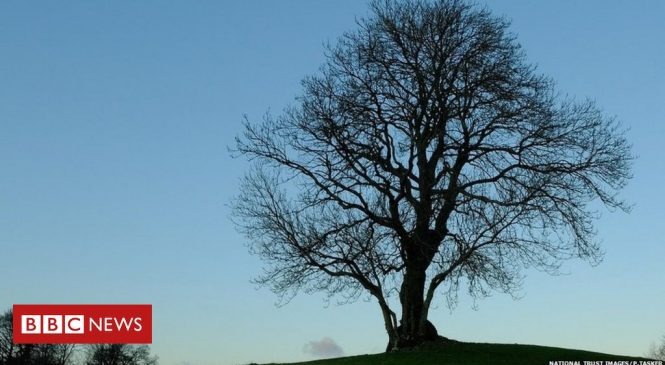 National Trust suffers 'worst year' for ash dieback