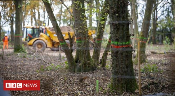 HS2: Moving ancient woodland habitat for rail line flawed, ecologists say