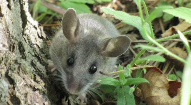 Scientists warn of human-to-wildlife COVID-19 transmission risk