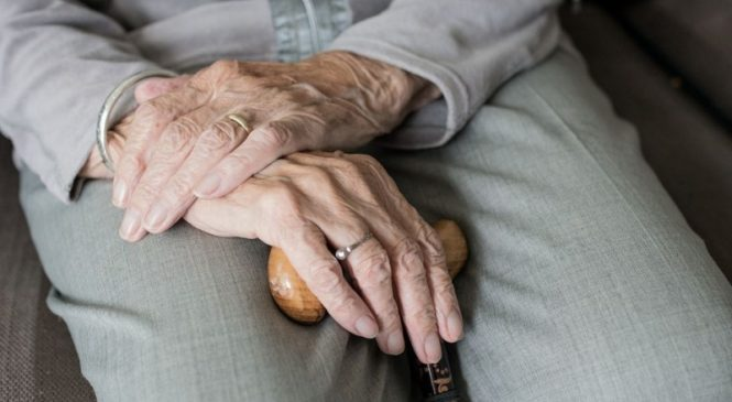 Study: Fecal transplant may one day be used to reverse cognitive decline
