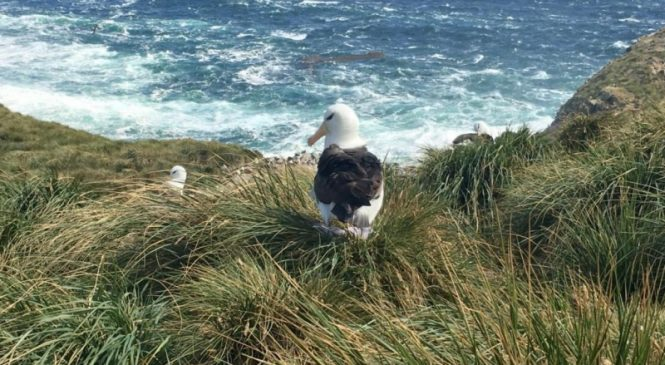 The arrival of seabirds transformed the Falkland Islands 5,000 years ago