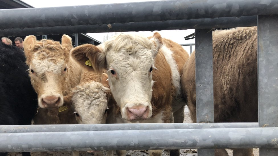 Brexit: Ministers unveil next steps in England's farming policy