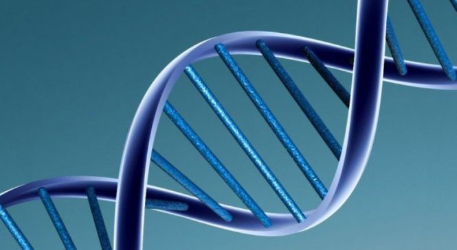 Space worm tests show microgravity can alter genes