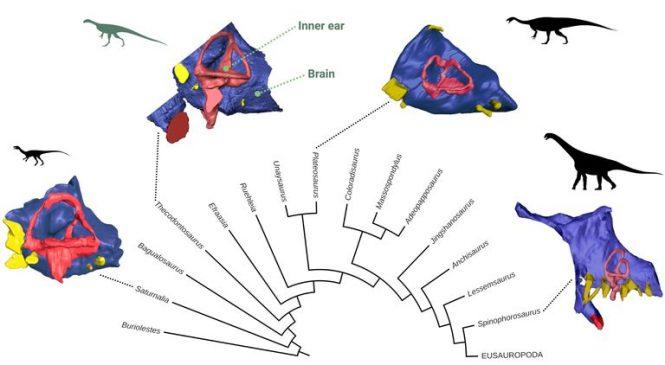 Bristol dinosaur's brain rebuilt using digital technology