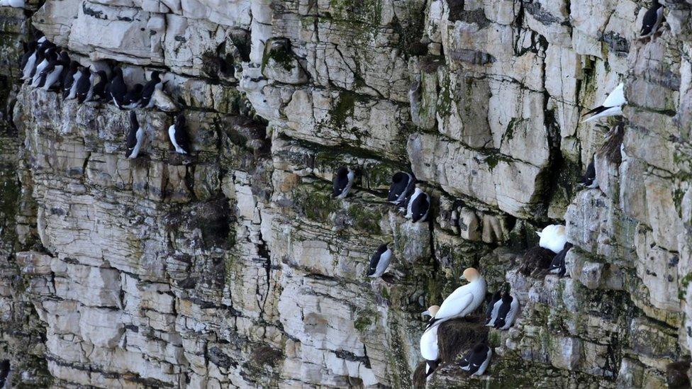Bird charity warns of harm from new wind farm