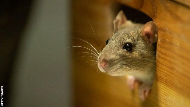 Australian Open: Players told not to feed mice while in Covid quarantine