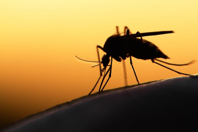 Genetic mutations that cause malaria drug resistance common in Asia, Africa