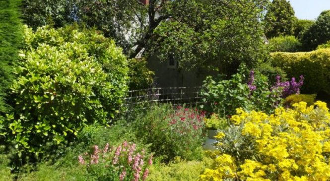 Urban pollinators get almost all their food from backyard gardens