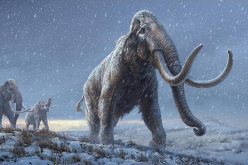 World's oldest DNA reveals new mammoth lineage