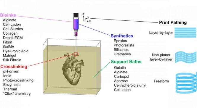 Study: New approach to 3D printing of human tissue closer to reality