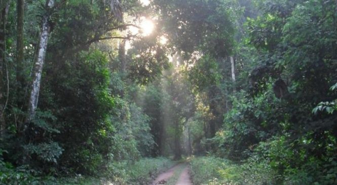 Climate change, human activity threatens carbon uptake in recovering Amazon forests