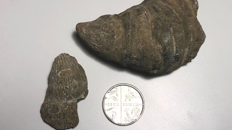 Boy finds 480 million-year-old fossil using set he got for Christmas