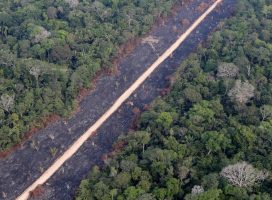 Brazil cuts environment budget despite climate summit pledge