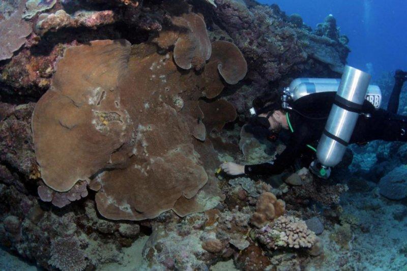 Understanding hidden diversity on coral reefs key to successful conservation