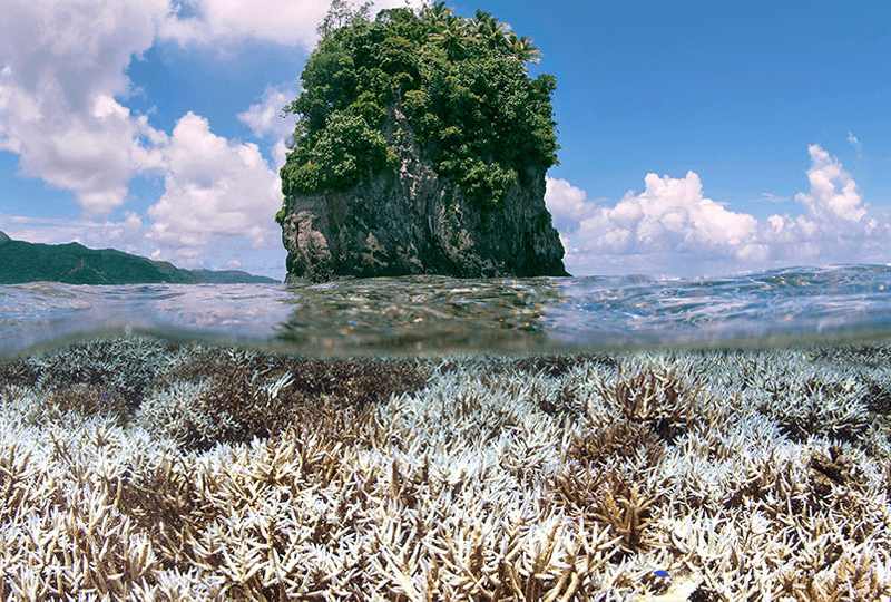 Then and now: Rising temperatures threaten corals