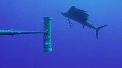 World's largest ocean monitoring system BRUVS launched