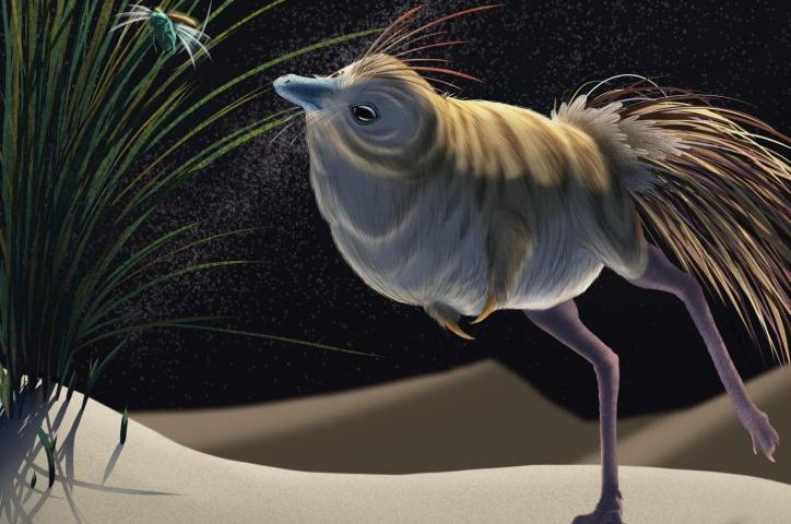 Owls may have inherited their night-hunting abilities from dinosaurs