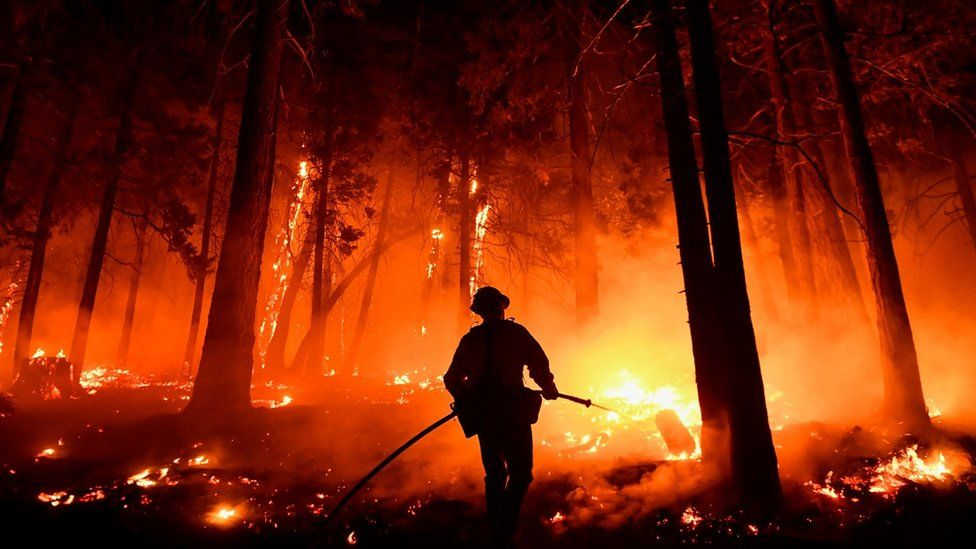 A fire in the Sequoia National Forest in August 2021.